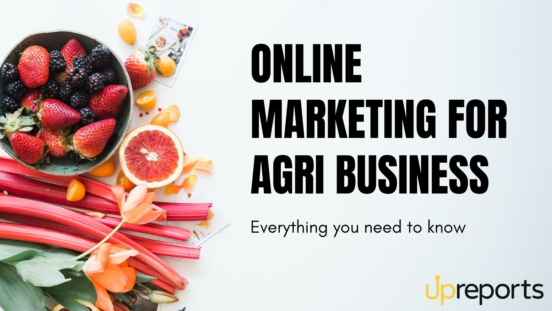 Marketing for Agribusiness: Everything You Need to Know
